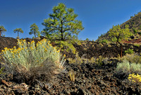Plants and lava, Sunset Crater National Monument