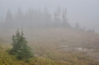Misty forest at Logan Pass