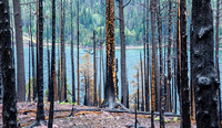Forest fire damage near St. Mary Lake